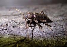 Brown bug on wood Stock Photo