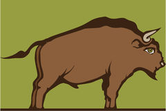 Brown bull Royalty Free Stock Images