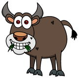 A brown bull eating grass Stock Image