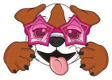Brown Bulldog in sunglasses hamming Royalty Free Stock Images