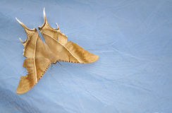 Brown butterfly on blue background Stock Photo