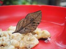 Brown butterfly feeding banana Stock Photography