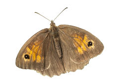 Brown butterfly flying isolated on white background, clipping path Stock Photo