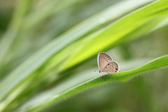 Brown butterfly on green leaves. Royalty Free Stock Photo
