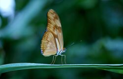 Brown Butterfly on Green Plant Leaf Royalty Free Stock Photo