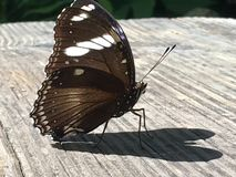 Brown Butterfly Heart Shadow Wings Royalty Free Stock Images