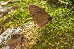 Brown butterfly hold on stone Stock Image
