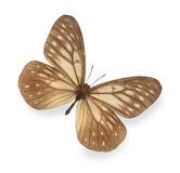 Brown butterfly isolated Royalty Free Stock Photos
