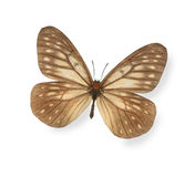 Brown butterfly isolated on white Royalty Free Stock Photo