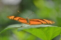 Brown Butterfly on Leaf in Macro Photography stock images