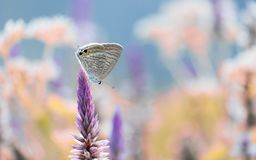 Brown butterfly perched on a flowe. R, with beautiful colorful background Royalty Free Stock Photography