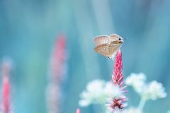 Brown butterfly perched on a flower. Ready to fly. With beautiful, unreal and dreamy blue background Stock Image