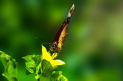 Brown Butterfly Perched on Green Leaf Plant in Closeup Photography Stock Images