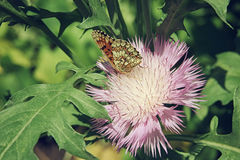 Brown butterfly sitting on a pink aster flower close up. Brown butterfly sitting on a pink aster flower close-up Stock Photo