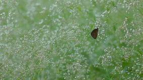 Brown butterfly sitting on a plant stock video footage