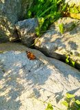 Brown butterfly sitting on a stone royalty free stock photography