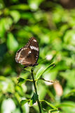 Brown butterfly on tree Stock Photos