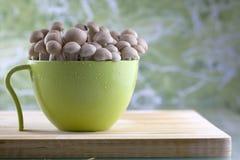 Brown button mushrooms Stock Photo