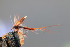 Brown caddisfly imitation. Macro shot of a dry fly fishing lure with brown hackle, wings and body imitating a caddisfly Royalty Free Stock Images