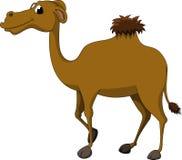 Brown camel cartoon Stock Image