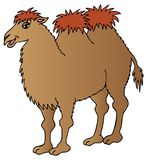Brown camel on white background Royalty Free Stock Photography