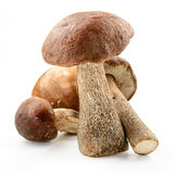 Brown cap boletus . Birch forest mushroom. Royalty Free Stock Photos