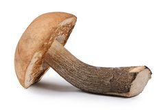 The brown cap boletus isolated on white background Royalty Free Stock Photos