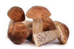 The brown cap boletus isolated on white background Royalty Free Stock Photography