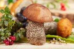 Brown cap boletus mushroom Stock Photo