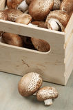 Brown cap mushrooms in box Royalty Free Stock Images