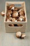 Brown cap mushrooms in box Stock Images