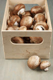 Brown cap mushrooms in box Stock Photography