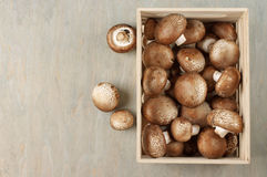 Brown cap mushrooms in box Stock Image