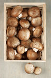 Brown cap mushrooms in box Royalty Free Stock Photos