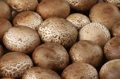 Brown cap mushrooms Stock Image