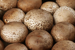 Brown cap mushrooms Stock Photo