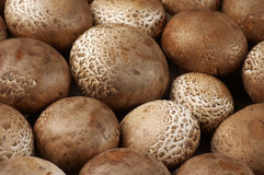Brown cap mushrooms Royalty Free Stock Photos