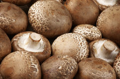 Brown cap mushrooms Stock Photography