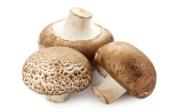 Brown cap mushrooms Royalty Free Stock Photo