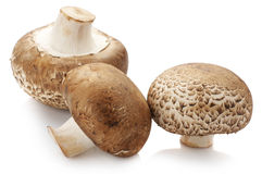 Brown cap mushrooms Royalty Free Stock Images