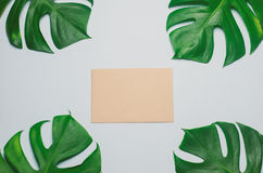 Brown card paper with green leaves on blue background Stock Photo