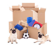 Brown cardboard boxes with different stuff and cute dogs isolate royalty free stock photos