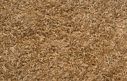 Brown carpet texture Stock Image