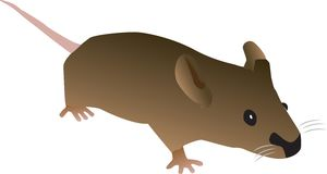 Brown Cartoon Mouse Stock Photography