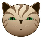 Brown cat. Illustration of a brown cat face Royalty Free Stock Photos