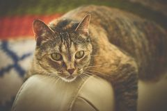 Brown Cat on Beige Leather Surface Stock Images