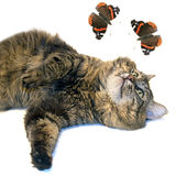 The brown cat and butterflies Stock Images