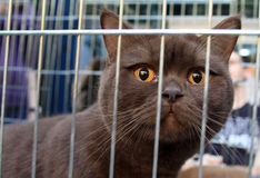 Brown cat in a cage Royalty Free Stock Photos