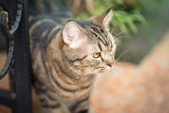 Brown cat in close up photo. Animal portrait Stock Photo