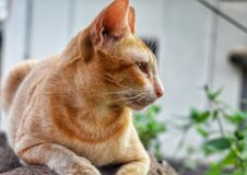 Brown cat with closeup looks stock image